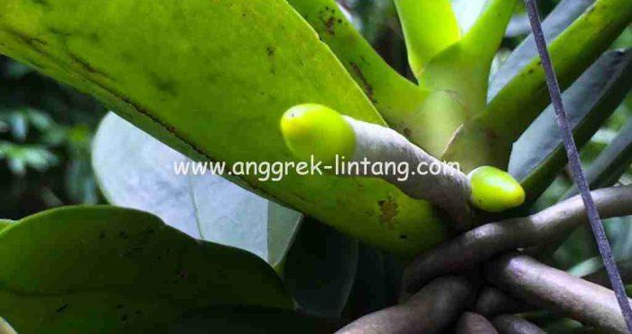 bagian tanaman anggrek